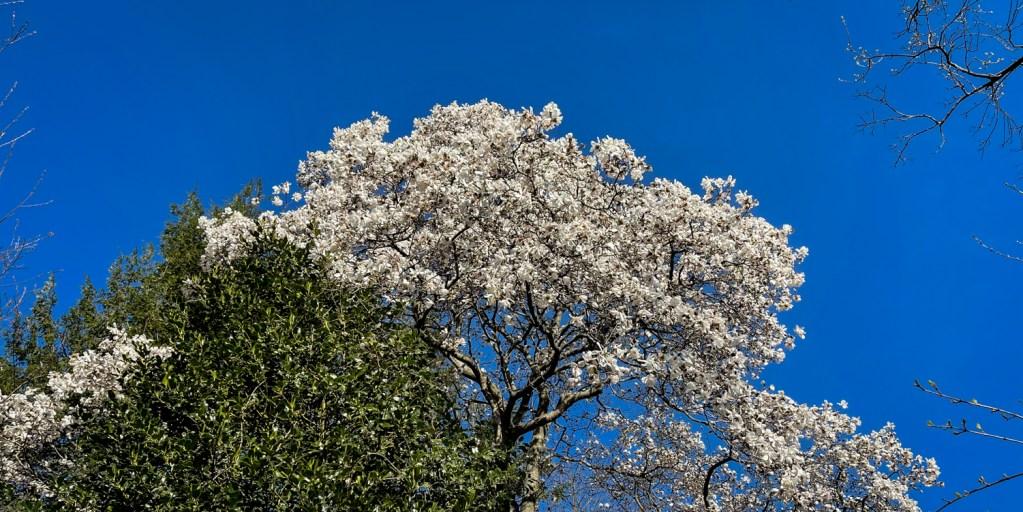 spring trees 2021