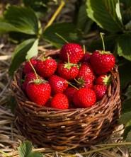 Benedek Gyümölcsfarm fotózás (3)