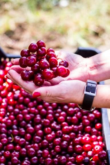 Benedek Gyümölcsfarm fotózás (46)