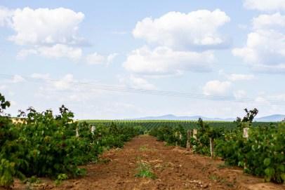 Benedek Gyümölcsfarm fotózás (54)