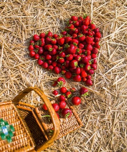 Benedek Gyümölcsfarm fotózás (6)