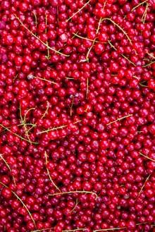 Benedek Gyümölcsfarm fotózás (73)