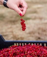 Benedek Gyümölcsfarm fotózás (75)
