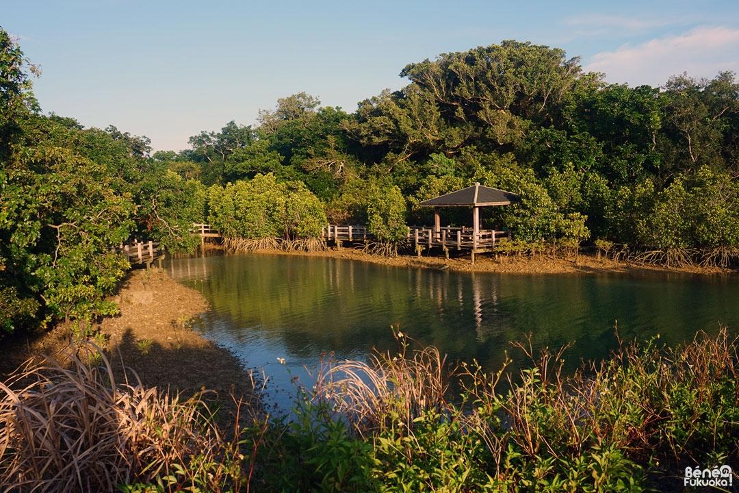 mangroves-miyakojima