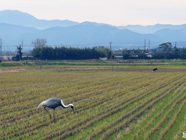 Déplacement professionnel à Kagoshima : Izumi et Akune
