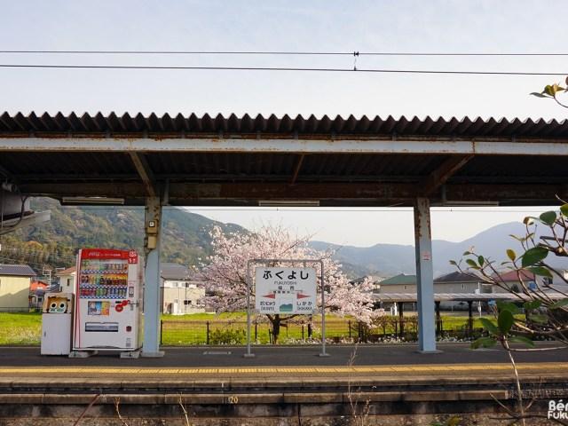 Le printemps à Fukuyoshi (Itoshima)