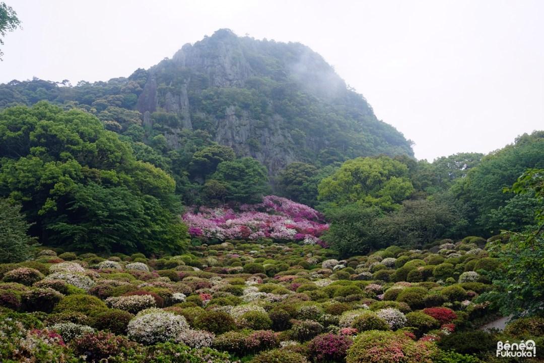 Azalées, jardin Mifuneyama, Saga