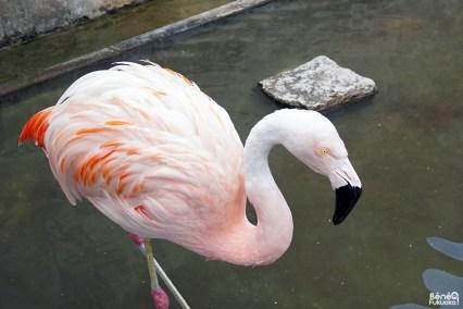 Zoo du Yama Jigoku, l'enfer de la montagne, Beppu