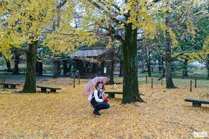 Momiji, parc Maizuru, Fukuoka