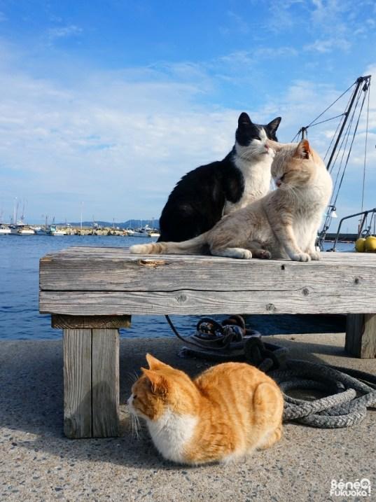 chats-genkaijima