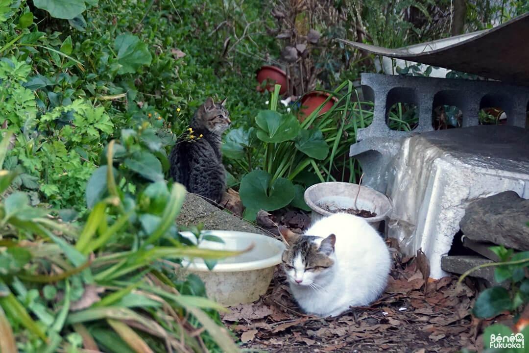 Les chats du Sanctuaire Atago, Fukuoka