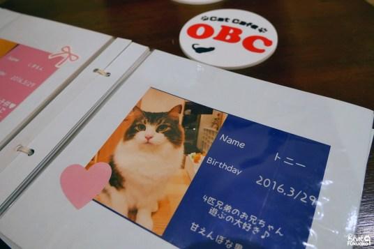 Café à chats OBC, Fukuoka