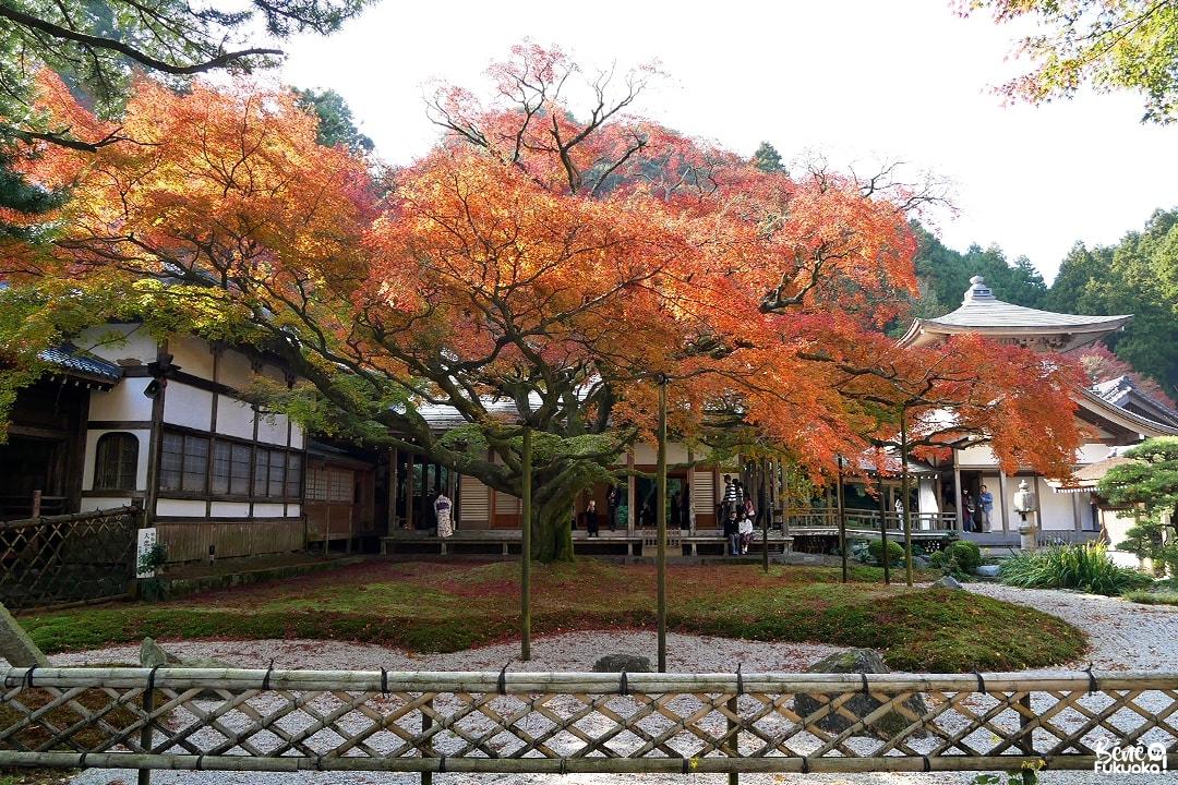 Grand érable du temple Raizan Sennyoji Daihiô-in, ville d'Itoshima, Fukuoka