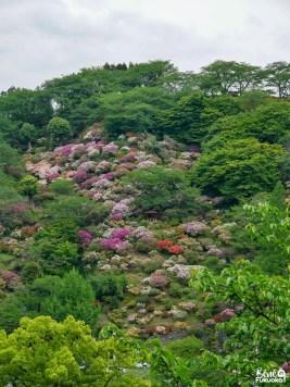 Jardin d'azalées en face du sanctuaire Yûtoku Inari, préfecture de Saga