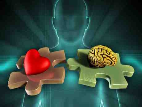 Risultati immagini per cervello cuore