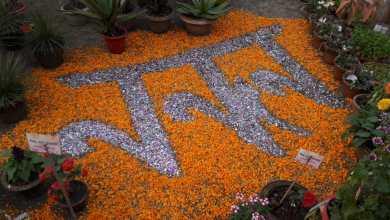 Photo of করোনেশন প্রাঙ্গনে ফুলেদের মেলা, মাতোয়ারা রায়গঞ্জ
