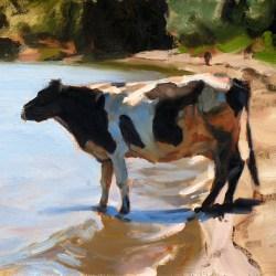 cow-thumbnail