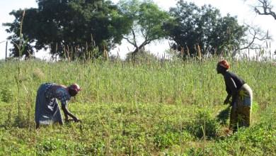 Photo of Secteur agricole : le gouvernement se dote d'outils stratégiques