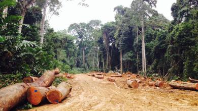 Photo of Près de 4500 visiteurs enregistrés à la Foire des activités issues des forêts