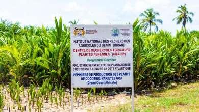 Photo of Aménagement de la zone balnéaire : Les pépinières de production de plants de cocotiers à Sèmè-Podji accueillent les ministres DOSSOUHOUI et TONATO