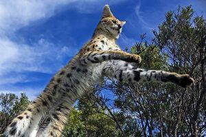 ABC-Benny-Rebel-Fotoworkshop-Afrika-Serval