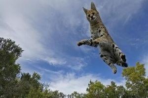 ABD-Benny-Rebel-Fotoworkshop-Afrika-Serval