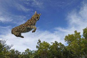 ABE-Benny-Rebel-Fotoworkshop-Afrika-Serval