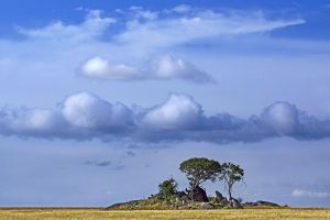 ABU-Benny-Rebel-Fotoreise-Serengeti-Tansania-188