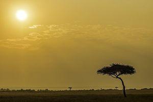 ACK-Benny-Rebel-Fotoworkshop-Maasai-Mara-Kenia-
