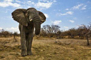 AGS-Benny-Rebel-Fotoreise-Suedafrika-Elefant