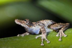 AIl-Benny-Rebel-Fotoreise-Frosch-Costa-Rica