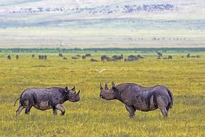 AIy-Benny-Rebel-Fotoreise-Tanzania-Nashorn-Spitzmaul