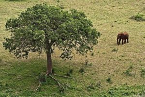 AJq-Benny-Rebel-Fotoreise-Tansania-Elefant