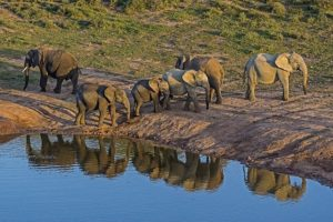 AJx-Benny-Rebel-Fotoreise-Suedafrika-Elefant