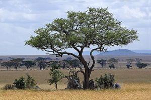 AKbBenny-Rebel-Fotoreise-Tansania