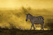 ALBBenny-Rebel-Fotoreise-Kenia
