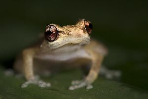 ALy-Benny-Rebel-Fotoreise-Frosch-Costa-Rica