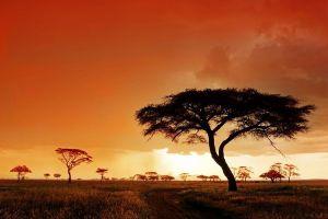 AMg-Benny-Rebel-Fotoreise-Serengeti-Tansania