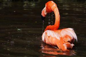 APl-Benny-Rebel-Fotoworkshop-Flamingo