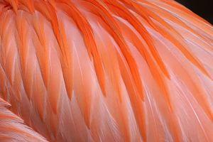 APo-Benny-Rebel-Fotoreise-Flamingo