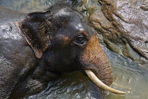 APx-Benny-Rebel-Fotoreise-ElefantSri-Lanka