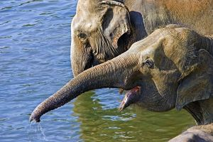 APy-Benny-Rebel-Fotoreise-ElefantSri-Lanka