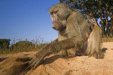 AQBenny-Rebel-Fotoreise-Suedafrika