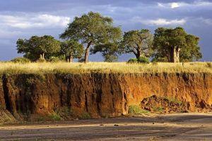 ATk-Benny-Rebel-Fotoreise-Tansania-Tarangire