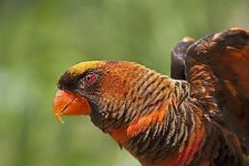 ATz-Benny-Rebel-Fotoworkshop-Vogelfotografie
