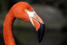 AVa-Benny-Rebel-Fotoworkshop-Flamingo