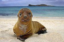BWBenny-Rebel-Fotoreise-Galapagos