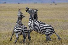 EABenny-Rebel-Fotoworkshop-Tansania