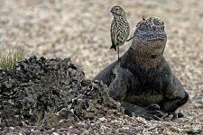 EGBenny-Rebel-Fotoreise-Galapagos