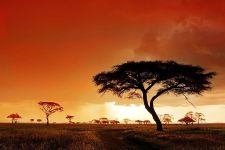 EKBenny-Rebel-Fotosafari-Afrika